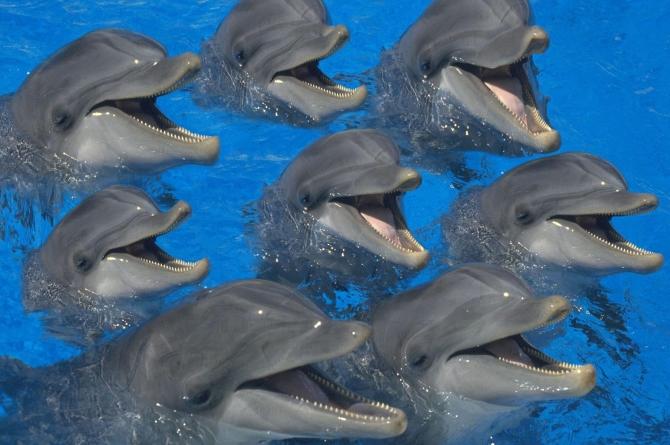 Логические уровни обучения: психотерапия, коучинг, дельфины и эволюция
